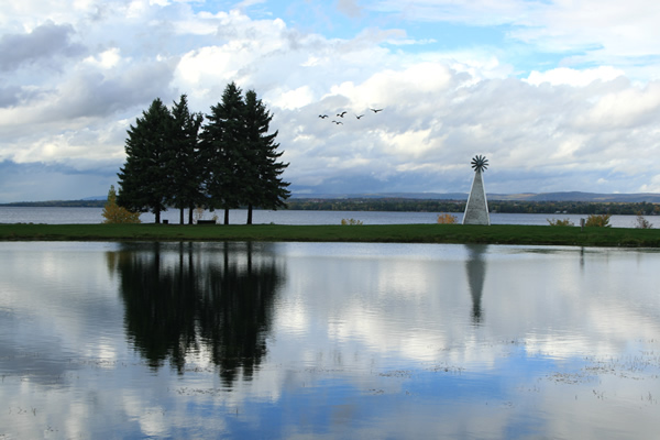 Mirror Birds, Andrew Haydon Park