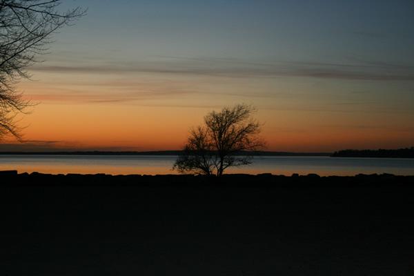Tree, Britannia Beach, November 11, 2010