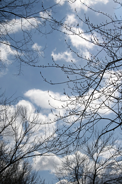 Branches and Sky, March 24, 2011