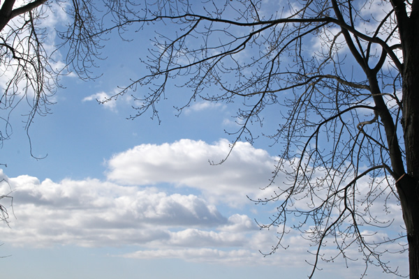 Tree and Sky, March 24, 2011
