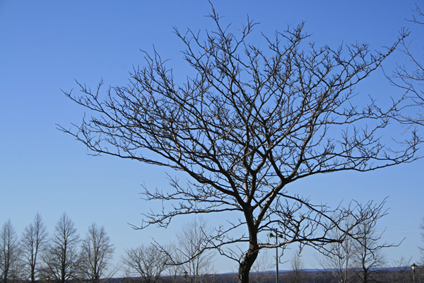 Low Tree, March 30, 2011