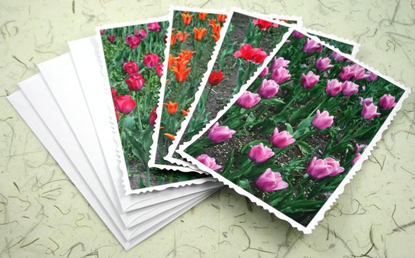 Ottawa tulip festival cards, etsy, horiz deck, medium