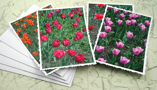 Ottawa tulip festival cards, etsy, horiz front, medium