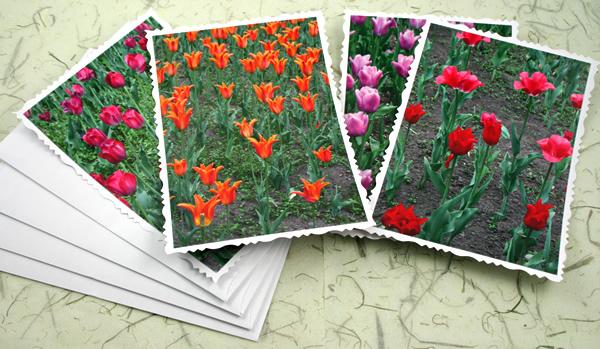 Ottawa tulip festival cards, etsy, odd, medium