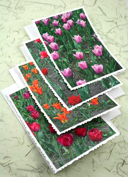 Ottawa tulip festival cards, etsy, vertical front, medium