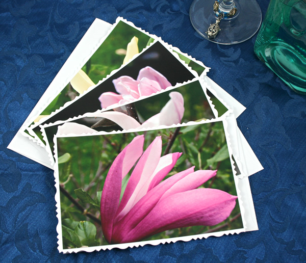 Dreamy magnolia cards, etsy, pink white, medium