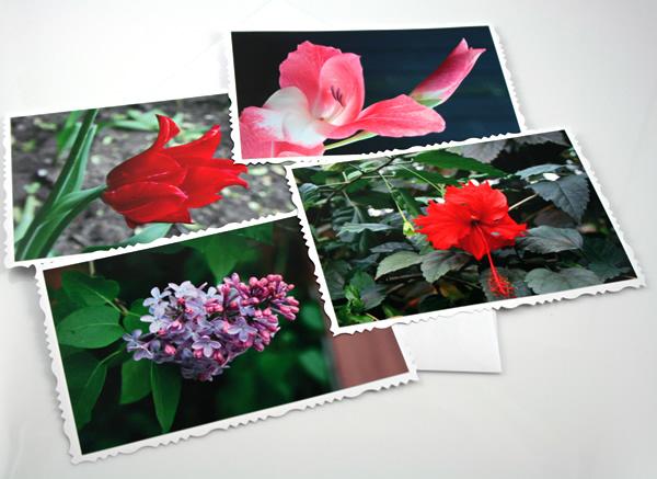 New life cards, etsy, front, medium