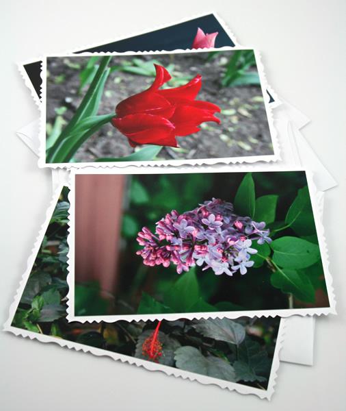 New life cards, etsy, odd, medium