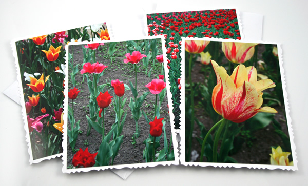 Sunny tulips cards, etsy, even, medium