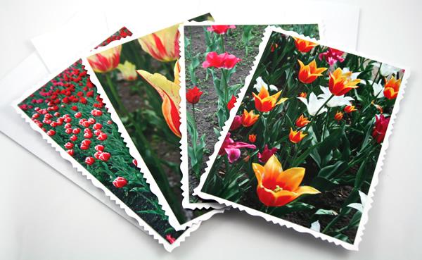 Sunny tulips cards, etsy, horiz deck, medium