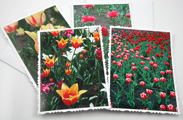 Sunny tulips cards, etsy, odd, medium