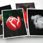 Tulip solitude cards, etsy, even, medium