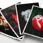Tulip solitude cards, etsy, front deck, medium