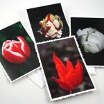 Tulip solitude cards, etsy, front, medium