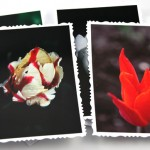 Tulip solitude cards, etsy, odd, medium