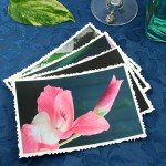 Fragile beauty cards, etsy, front gladiolus, md