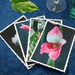 Fragile beauty cards, etsy, front gladiolus one, md