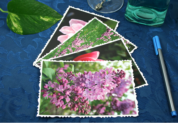Petals to light cards, etsy, front lilacs, medium