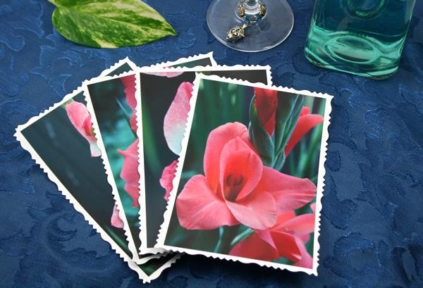 Pink flesh gladiolus cards, etsy, front 1, md