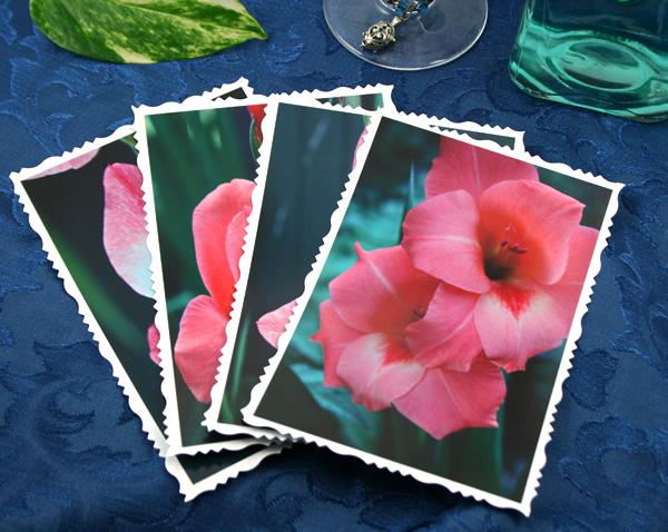 Pink flesh gladiolus cards, etsy, front 3, md