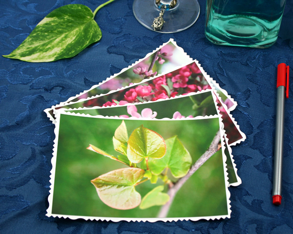 Spring birth cards, etsy, front leaves, md
