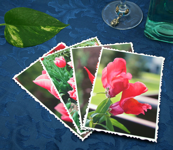 Spring fames cards, etsy, front snapdragon, mdium