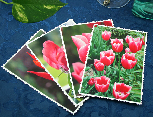 Spring fames cards, etsy, front tulip field, medium