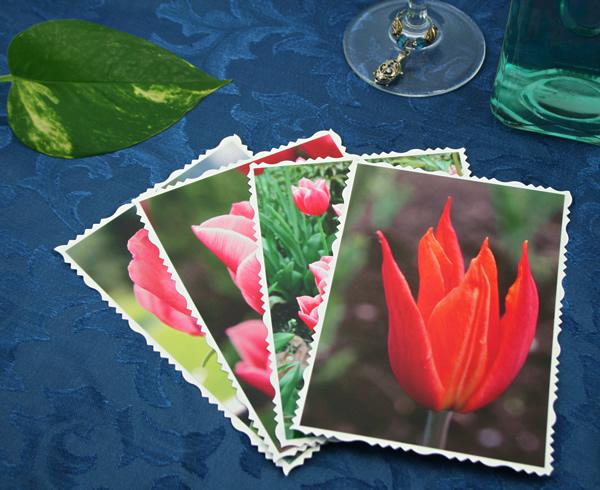 Spring fames cards, etsy, front tulip, medium