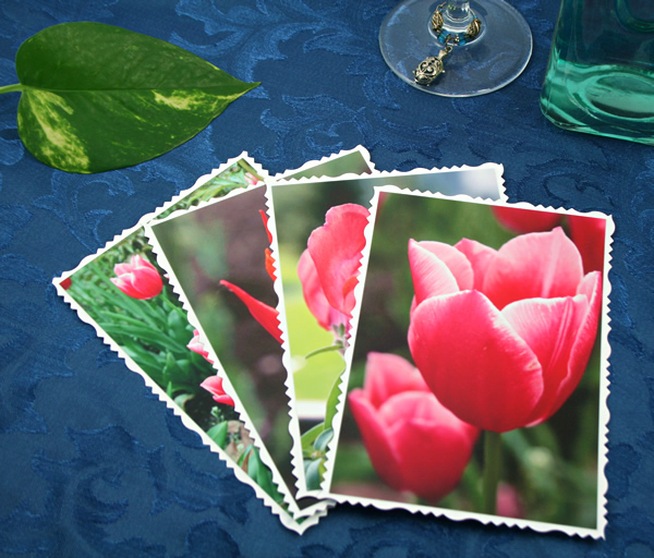 Spring fames cards, etsy, front tulips, medium