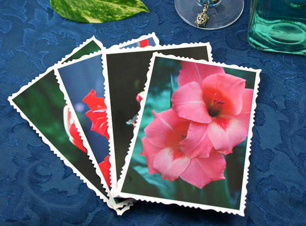 Spring highlights cards, etsy, front pink gladiolus, md