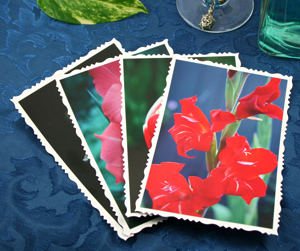 Spring highlights cards, etsy, front red gladiolus, md