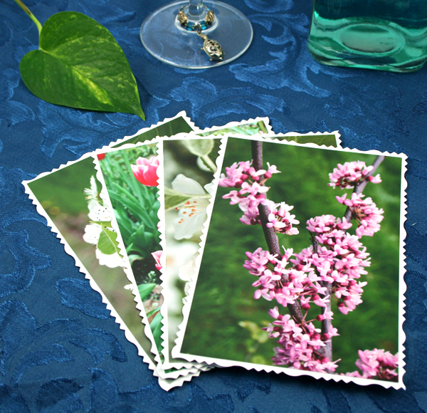 Arboretum in spring cards, etsy, front lilac, md