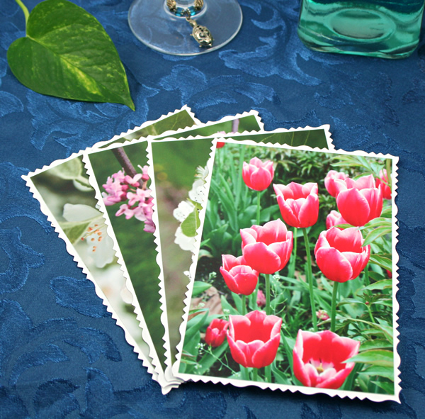 Arboretum in spring cards, etsy, front tulips, md