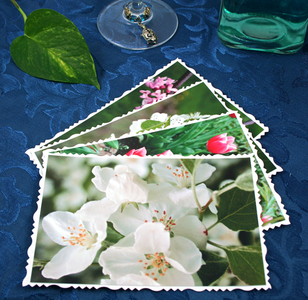 Arboretum in spring cards, etsy, front white, md