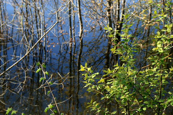 Young Branches on Ottawa River, May 17, 2013, med