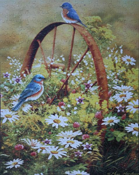 Birds 1, med