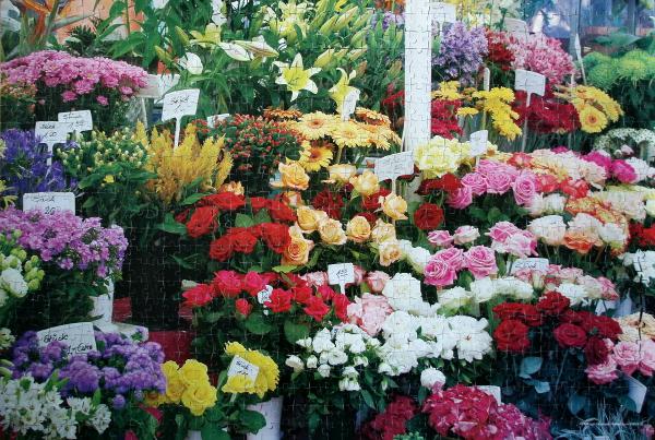 Flowers in Bavaria, Germany, med