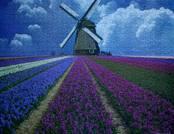 Flower field, North Holland Province, Netherlands, med