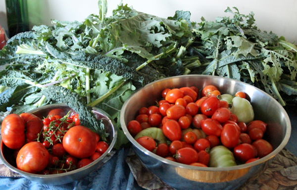 kale tomato harvest light, md