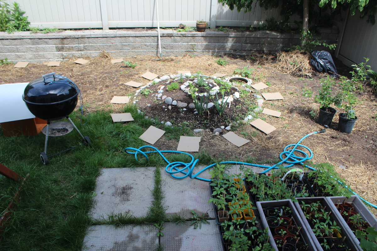 Back yard, herb spiral, preparing to build beds 1200