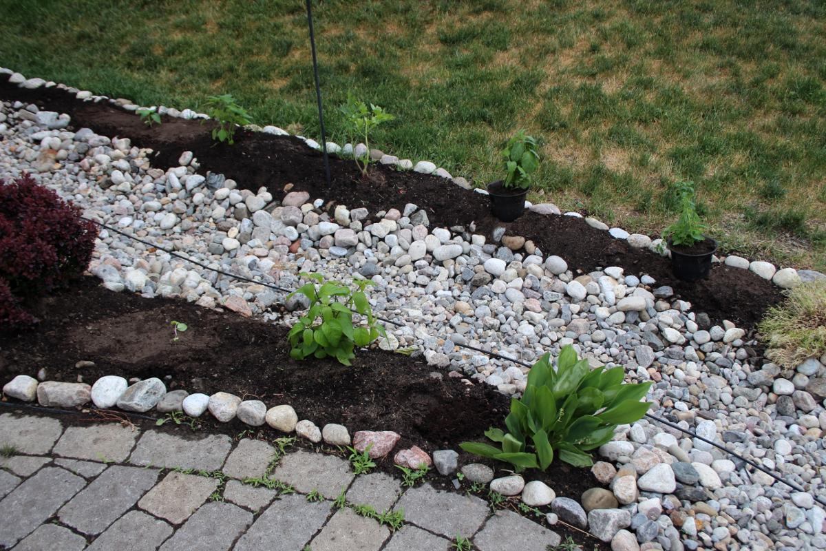 Front planting mint 1200