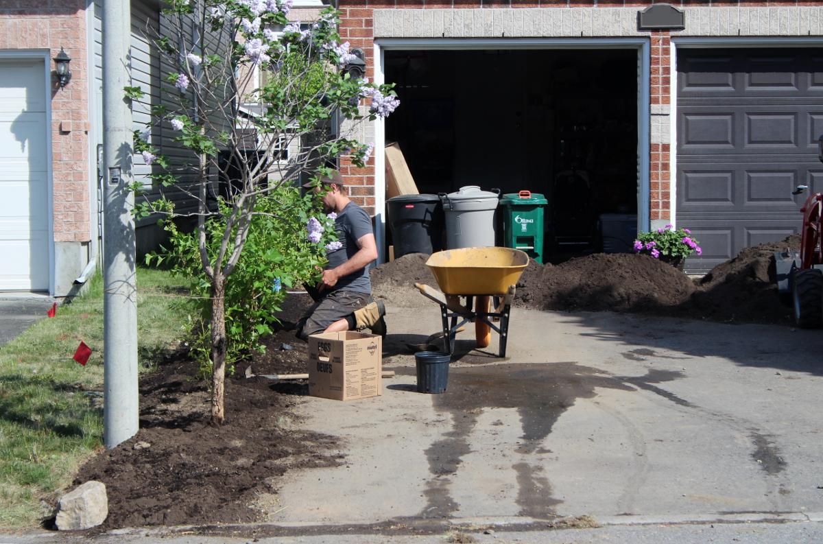 Gavin planting bushes 1200