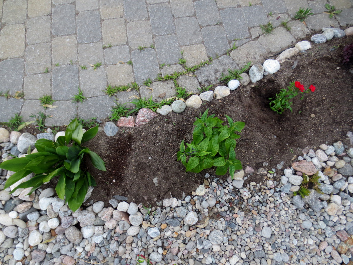 Plants along driveway 1200