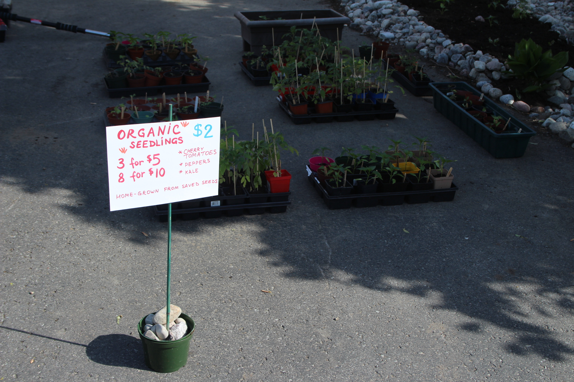 sale_organic_seedlings